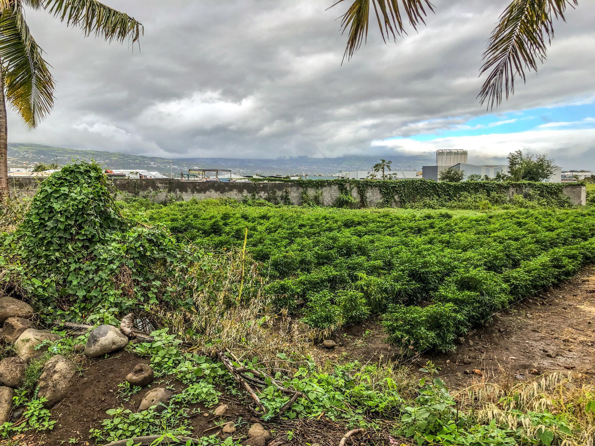 Terrains à bâtir en zone économique - Saint Louis (Réunion)